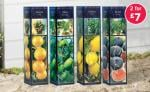 Lemon, Orange, Fig, Olive Trees, 2 for £7.00 at Lidl