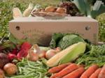 Win an organic veg box @ MyFamilyClub