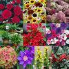 £100 of plants for £29.99 (plus free P&P with voucher code PB0712) @ J Parker Bulbs