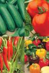 Win 1 of 15, a Grafted Vegetable Plants Collection worth more than £25 @ RHS