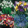 Summer Bulb Collection £1 for 100 Bulbs! @ jparkers.co.uk  + £3.99 Del - Plus FREE WITH ORDERS OVER £5 - Dwarf Red Japanese Azalea