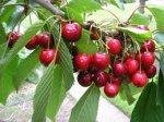 Fruit Trees £5.99 @ Poundstretcher Telford.