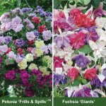 TM 15 free plants just pay postage £4.99