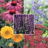 Thompson & Morgan Two separate GW Offers - 48 free Butterfly-friendly Perennials (just pay £5.65 ) and/or  48 free Lavenders (just pay £5.65 p&p)
