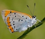 Join Butterfly Conservation for one year FREE (usually £30 a year)