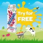 Free Yazoo Yogurt Smoothie