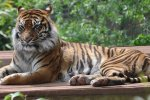 Christmas weekends and school holiday to South lakes safari zoo family of 4 for £24 @ wowcher
