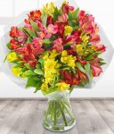 Alstroemeria bouquet free delivery anywhere in UK £13.45 @ eflorist