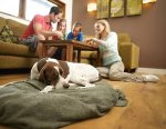Win £400 worth of Forest Holidays vouchers and a hamper of Applaws pet food. @ applaws @ FB