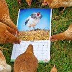 Free happy egg 2015 calendar