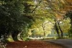WIN A LUXURY BREAK IN THE NEW FOREST WORTH £2,750 @ Hello