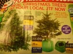 COLORADO 3-4 FT REAL POTTED CHRISTMAS TREE £11.99 @  JTF in store