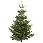 All Real Christmas Tree £10 or Less @ B&Q