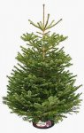 Real Christmas tree now £10 - and get a £20 voucher @ Ikea