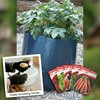 Spuds you might like! FREE* Potato growing kit + veg seed - worth £24.00 Just pay postage £5.65 @ Thompson & Morgan