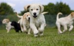 Win a Guide Dogs puppy-walking class @ The Telegraph