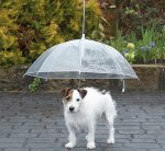 Dog Umbrella - B&M Stores - Only £1.99