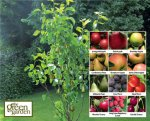 They're back - Aldi Fruit Trees Only £3.99 from Thursday 5th
