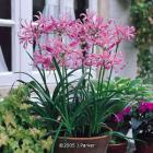 Gardening Offers, 6 Plants @ £1.45  @ J Parkers + 10% off + 12 Free Plants