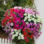 £9.99 for 100 plants PLUS 60 FREE jerseyplantsdirect.com