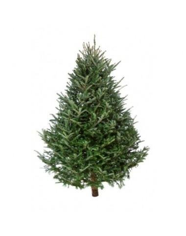 Real Christmas Tree 6ft - £7.99 @ Home Bargains - HotUKDeals