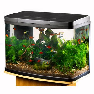 Love fish panorama tank 40 litre in store for Aquarium boule 20 litres