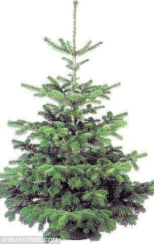 Half Price Artificial Christmas Trees
