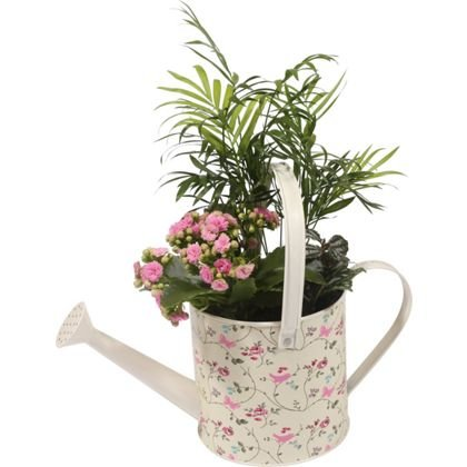 hanging baskets pots and many other indoor plants at. Black Bedroom Furniture Sets. Home Design Ideas