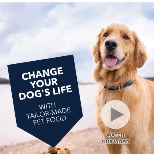 Beta puppy food deals