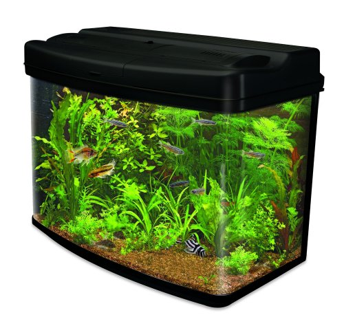 Freebies fish tank
