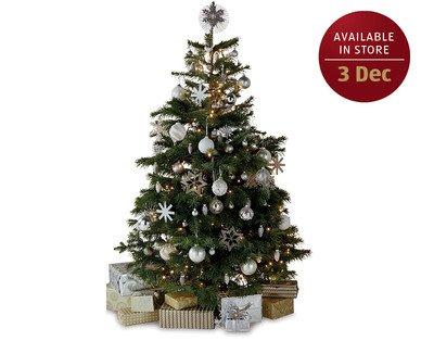 scottish nordmann fir christmas tree scanning at. Black Bedroom Furniture Sets. Home Design Ideas