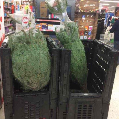 Asda Christmas Trees: Asda Reduced Christmas Trees £10 Instore