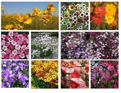 Park Seed Coupon - Grab 20% Reduction On All Seeds + Free Postage Cut the cost of Park Seed shopping to save you a lot of money When buy what you need. Save big bucks w/ this offer: Grab 20% reduction on All Seeds + Free delivery.